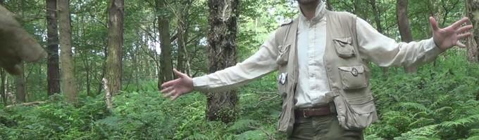 À quoi ressemblaient les forêts des temps anciens ?